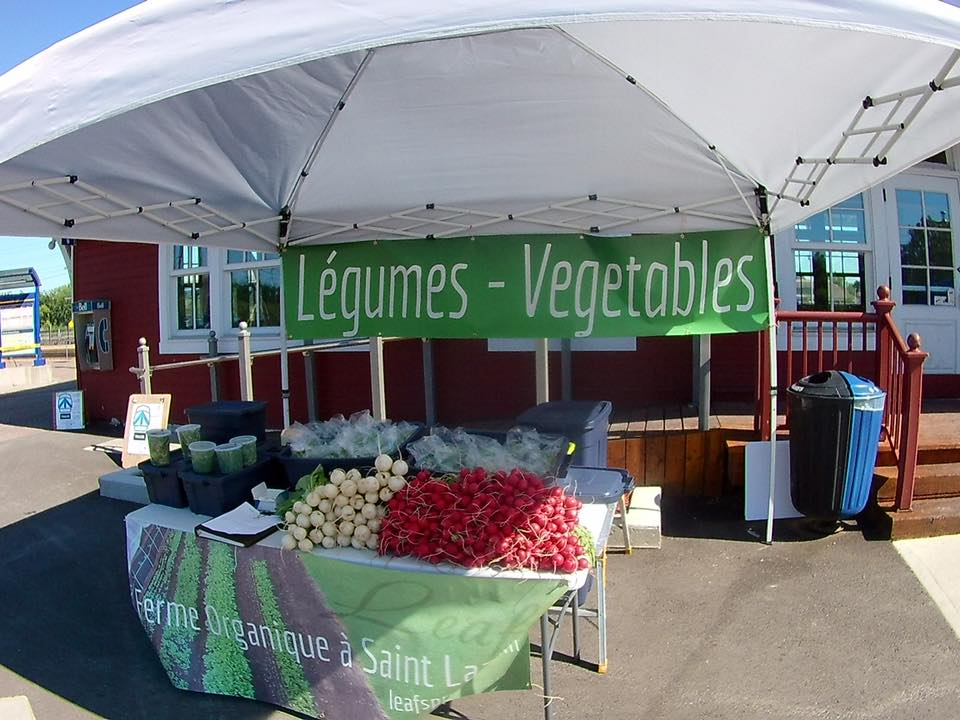 Leafs légumes